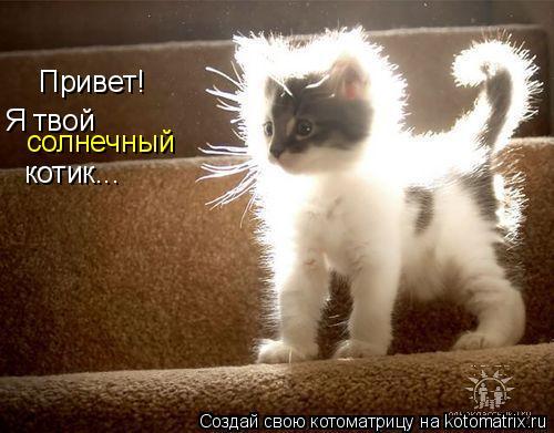 Котоматрица: Привет! Я твой  солнечный котик...