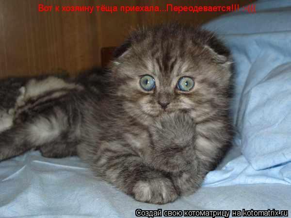 Котоматрица: Вот к хозяину тёща приехала...Переодевается!!! :-(((