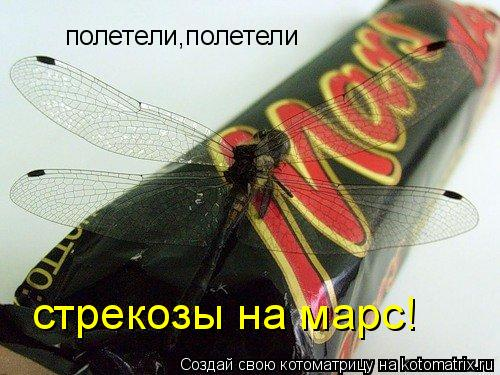 Котоматрица: полетели,полетели стрекозы на марс!