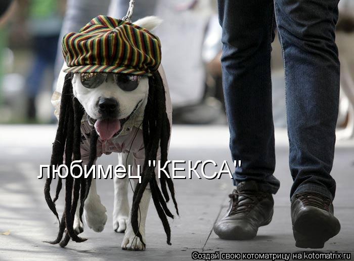 "Котоматрица: любимец ""КЕКСА"""