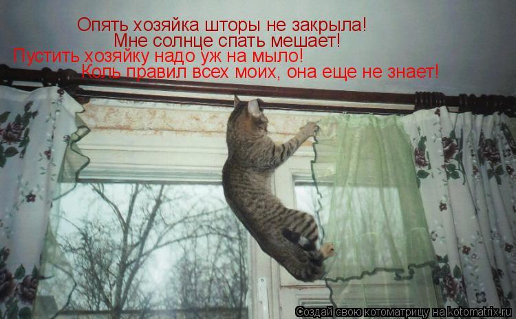 Котоматрица: Опять хозяйка шторы не закрыла! Мне солнце спать мешает! Пустить хозяйку надо уж на мыло! Коль правил всех моих, она еще не знает!