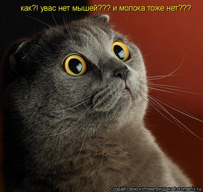 Котоматрица: как?! увас нет мышей??? и молока тоже нет???