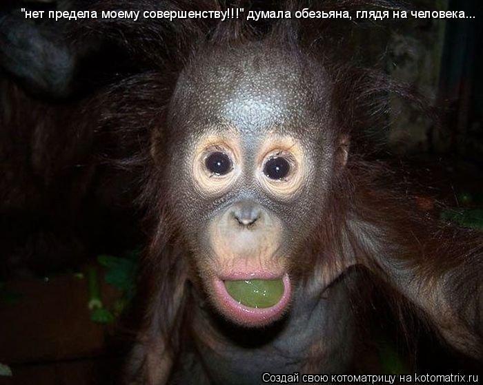 "Котоматрица: ""нет предела моему совершенству!!!"" думала обезьяна, глядя на человека..."