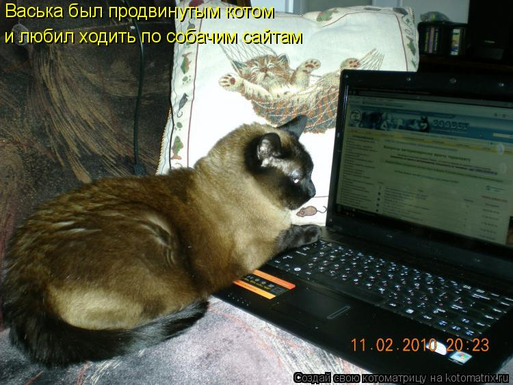 Котоматрица: Васька был продвинутым котом и любил ходить по собачим сайтам