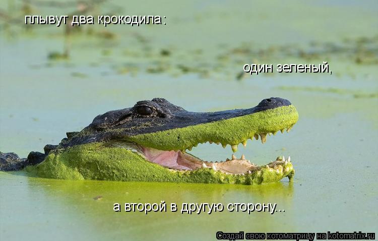 Котоматрица: плывут два крокодила : один зеленый,  а второй в другую сторону...