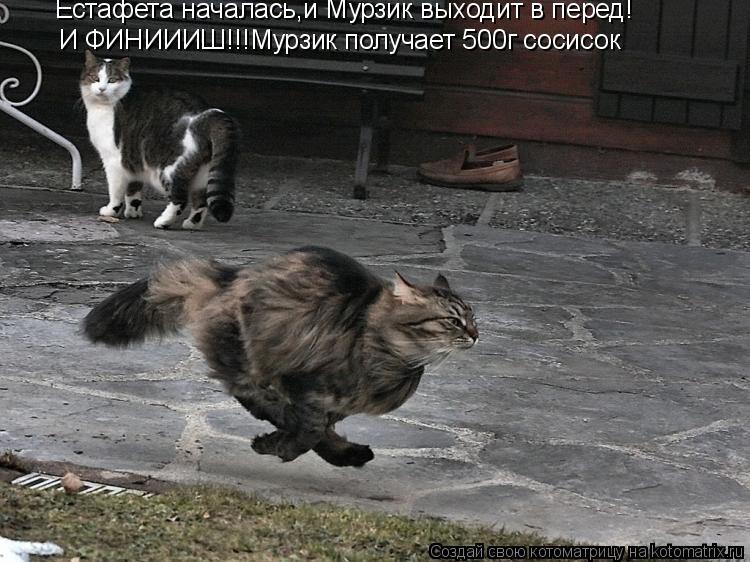 Котоматрица: Естафета началась,и Мурзик выходит в перед! И ФИНИИИШ!!!Мурзик получает 500г сосисок