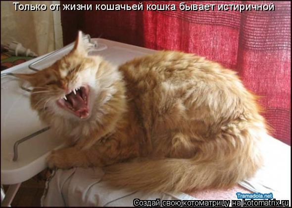 Котоматрица: Только от жизни кошачьей кошка бывает истиричной