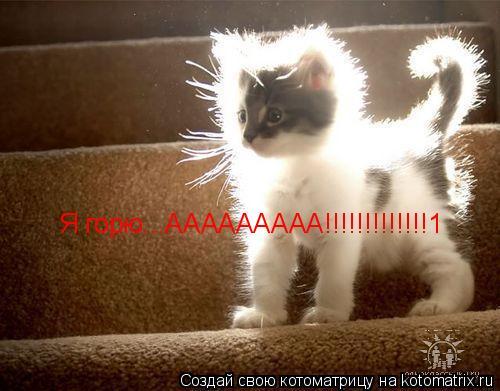 Котоматрица: Я горю...ААААААААА!!!!!!!!!!!!!1