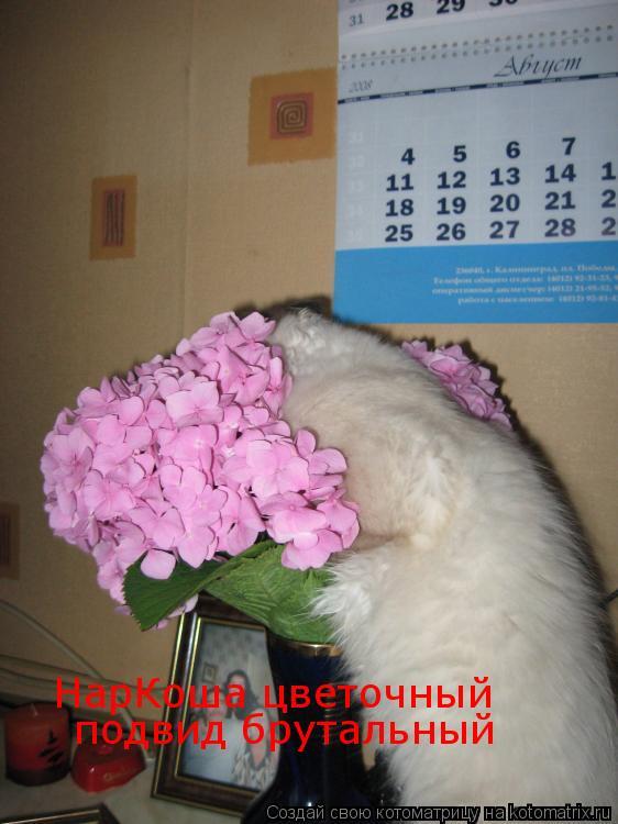 Котоматрица: НарКоша цветочный подвид брутальный