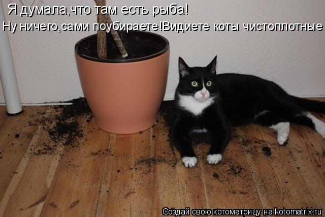 Котоматрица: Я думала,что там есть рыба! Ну ничего,сами поубираете!Видиете коты чистоплотные