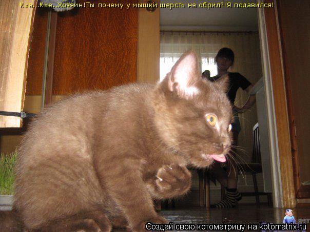 Котоматрица: Кхе...Кхе..Хозяин!Ты почему у мышки шерсть не обрил?!Я подавился!