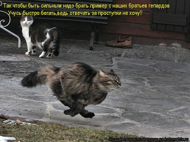 Котоматрица: Так чтобы быть сильным надо брать пример с наших братьев гепардов Учусь быстро бегать,ведь отвечать за проступки не хочу!!