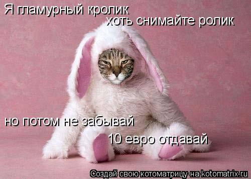 Котоматрица: Я гламурный кролик хоть снимайте ролик но потом не забывай 10 евро отдавай