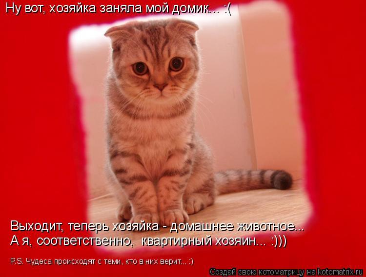 Котоматрица: Ну вот, хозяйка заняла мой домик... :( Выходит, теперь хозяйка - домашнее животное... А я, соответственно,  квартирный хозяин... :))) P.S. Чудеса прои