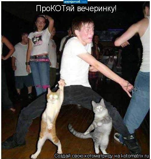 Котоматрица: ПроКОТяй вечеринку!