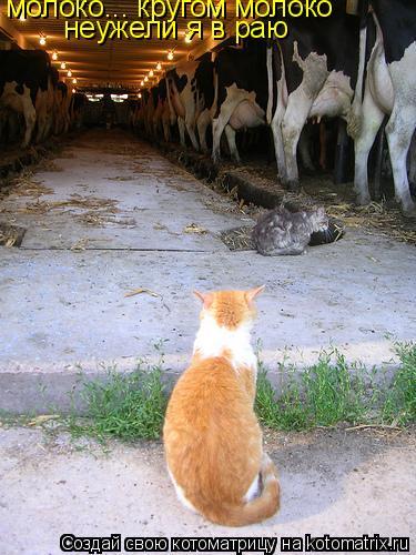 Котоматрица: молоко... кругом молоко неужели я в раю