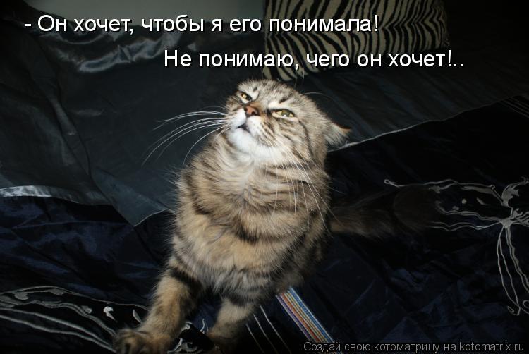 Котоматрица: - Он хочет, чтобы я его понимала!   Не понимаю, чего он хочет!..