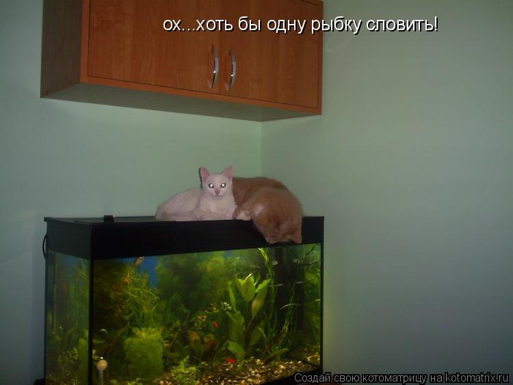 Котоматрица: ох...хоть бы одну рыбку словить!