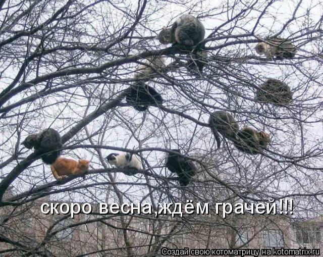 Котоматрица: скоро весна,ждём грачей!!!