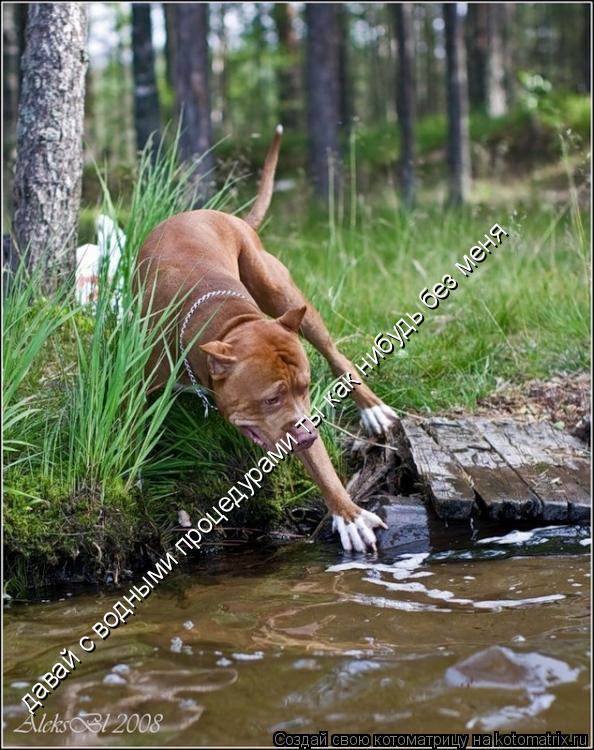 Котоматрица: давай с водными процедурами ты как нибудь без меня