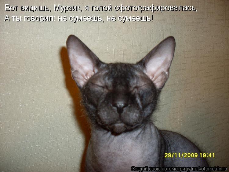 Котоматрица: Вот видишь, Мурзик, я голой сфотографировалась, А ты говорил: не сумеешь, не сумеешь!