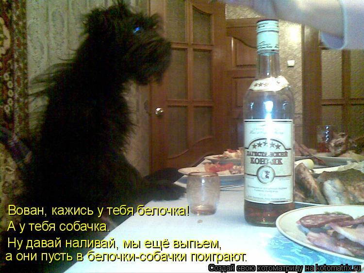 Котоматрица: Вован, кажись у тебя белочка!  А у тебя собачка.  Ну давай наливай, мы ещё выпьем,  а они пусть в белочки-собачки поиграют.