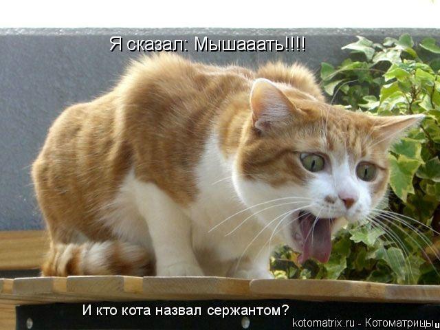 Котоматрица: Я сказал: Мышааать!!!! И кто кота назвал сержантом?