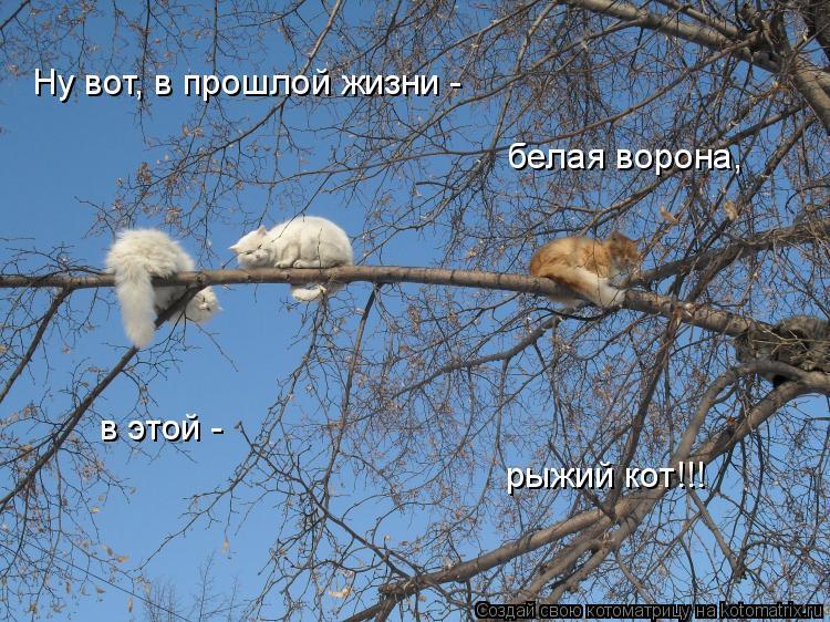 Котоматрица: Ну вот, в прошлой жизни -  белая ворона, в этой - рыжий кот!!!