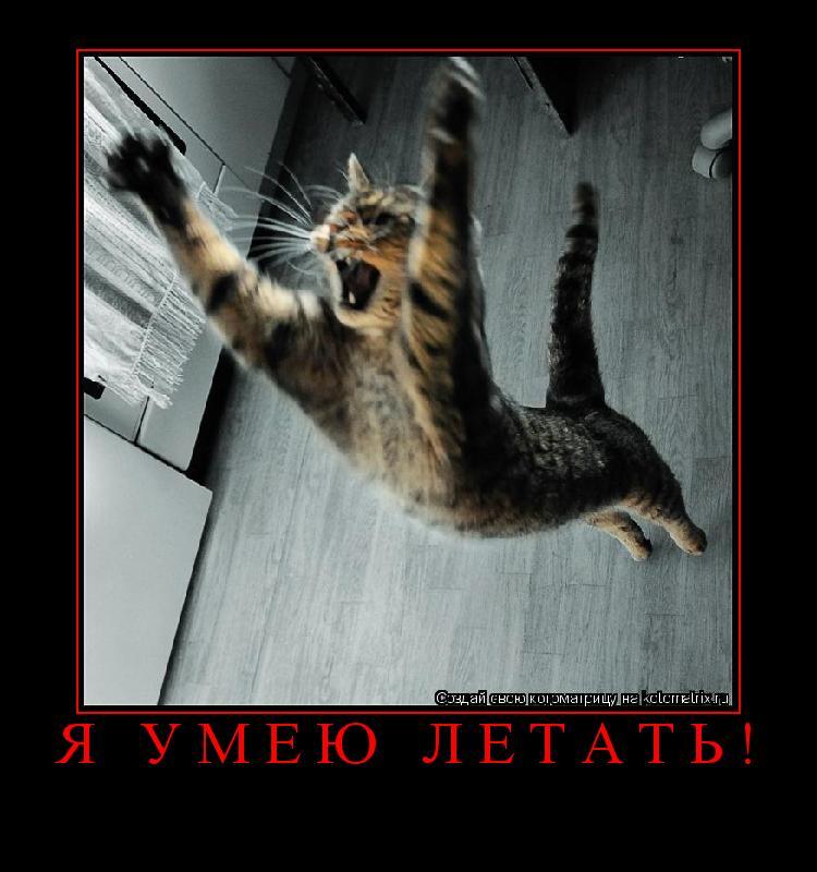 Котоматрица: Я умею летать!