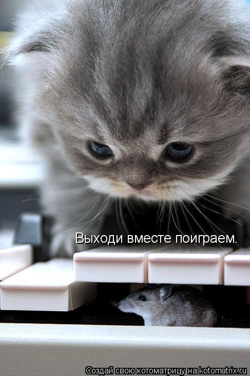Котоматрица: Выходи вместе поиграем.