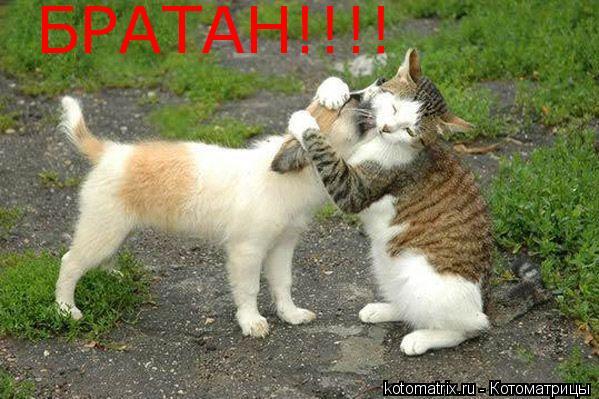 Котоматрица: БРАТАН!!!!