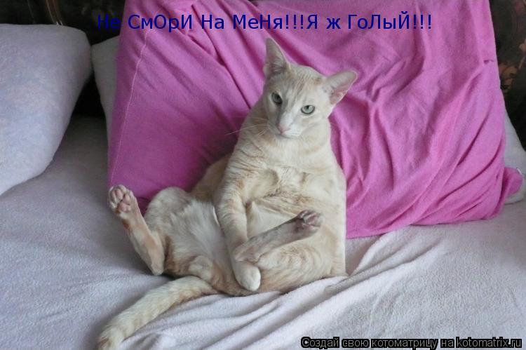 Котоматрица: Не СмОрИ На МеНя!!!Я ж ГоЛыЙ!!!