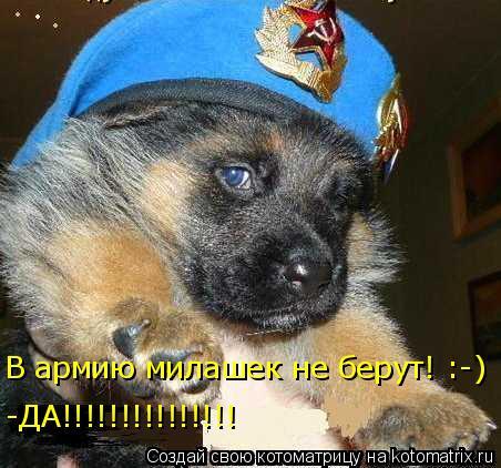 Котоматрица: В армию милашек не берут! :-) -ДА!!!!!!!!!!!!!!!