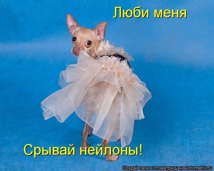 Котоматрица: Люби меня Срывай нейлоны!