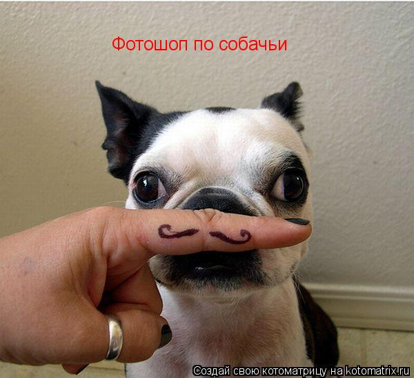 Котоматрица: Фотошоп по собачьи