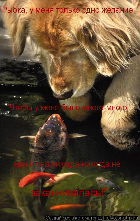 """Котоматрица: Рыбка, у меня только одно желание: """"Чтобы у меня было много-много  еды и она никогда-никогда не  заканчивалась!"""""""
