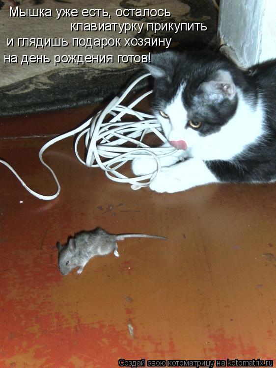 Котоматрица: Мышка уже есть, осталось  клавиатурку прикупить  и глядишь подарок хозяину  на день рождения готов!