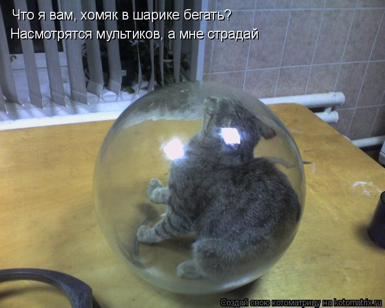 Котоматрица: Что я вам, хомяк в шарике бегать?  Насмотрятся мультиков, а мне страдай