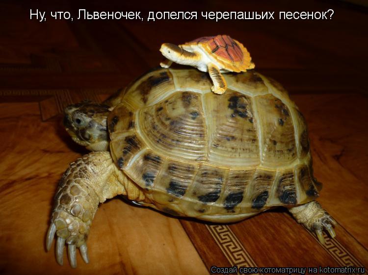 Котоматрица: Ну, что, Львеночек, допелся черепашьих песенок?