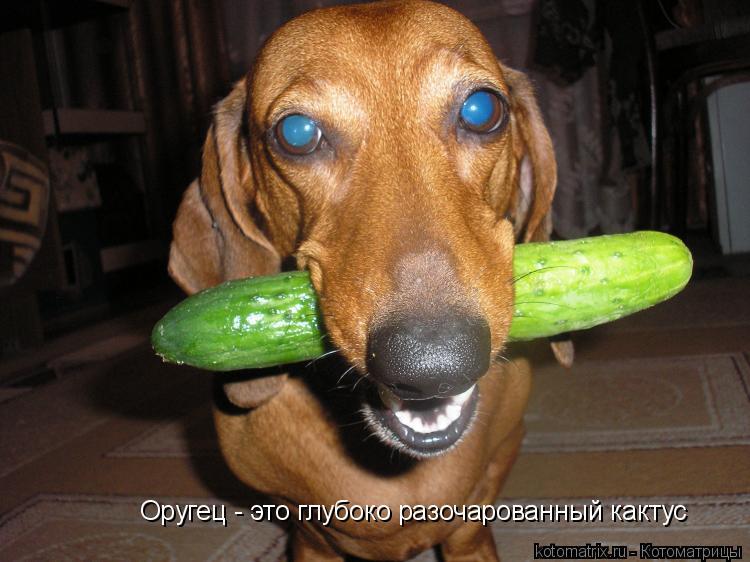 Котоматрица: Оругец - это глубоко разочарованный кактус