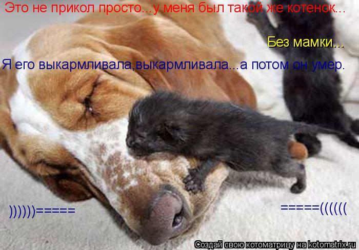 Котоматрица: Это не прикол просто...у меня был такой же котенок... Без мамки... Я его выкармливала,выкармливала...а потом он умер. =====(((((( ))))))=====