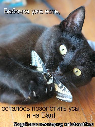 Котоматрица: Бабочка уже есть, и на Бал! осталось позолотить усы -