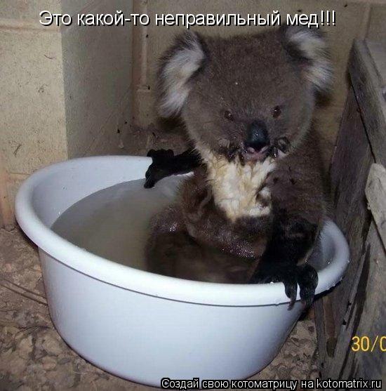 Котоматрица: Это какой-то неправильный мед!!!