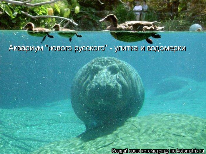 """Котоматрица: Аквариум """"нового русского"""" - улитка и водомерки"""