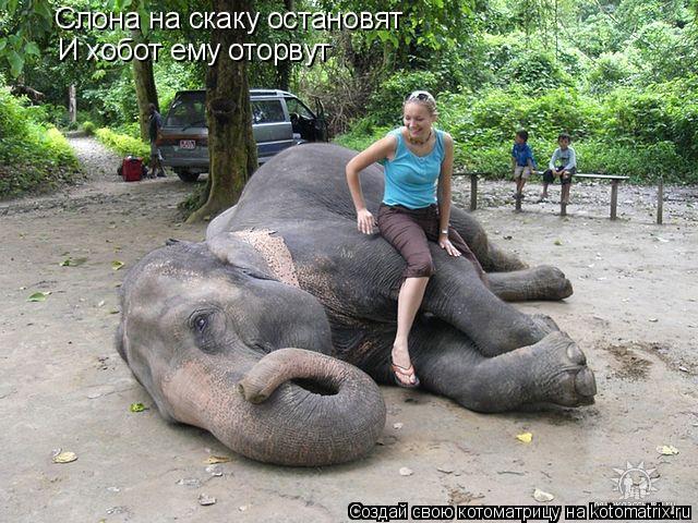 Котоматрица: Слона на скаку остановят И хобот ему оторвут