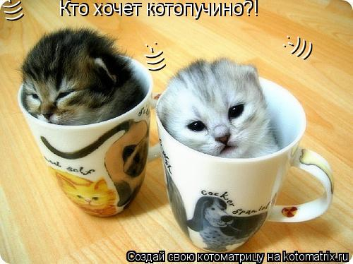 Котоматрица: Кто хочет котопучино?! Кто хочет котопучино?! :-))) :-))) :-)))