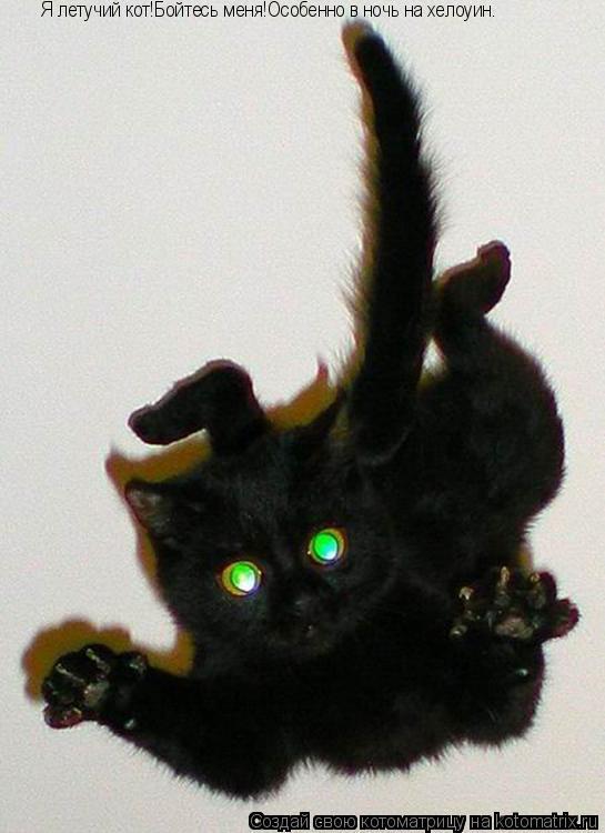 Котоматрица: Я летучий кот!Бойтесь меня!Особенно в ночь на хелоуин.