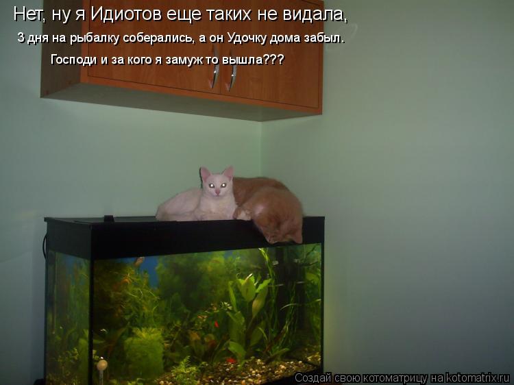 Котоматрица: Нет, ну я Идиотов еще таких не видала,  3 дня на рыбалку соберались, а он Удочку дома забыл. Господи и за кого я замуж то вышла???