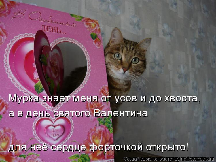 Котоматрица: Мурка знает меня от усов и до хвоста, а в день святого Валентина  для неё сердце форточкой открыто!
