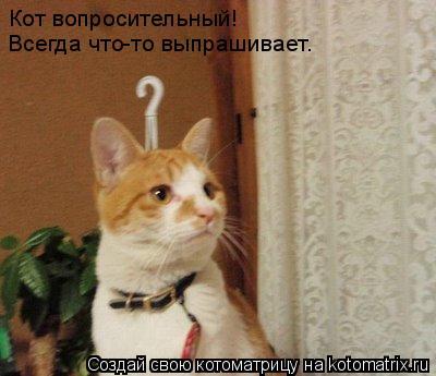 Котоматрица: Кот вопросительный! Всегда что-то выпрашивает.